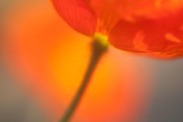 آموزش عکاسی ماکرو با نور طبیعی