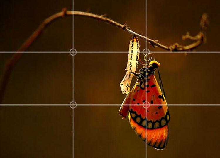 قانون یکسوم در عکاسی